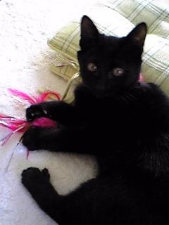 黒猫姫ちゃん♪