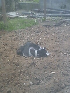 野良猫さん腰抜け☆
