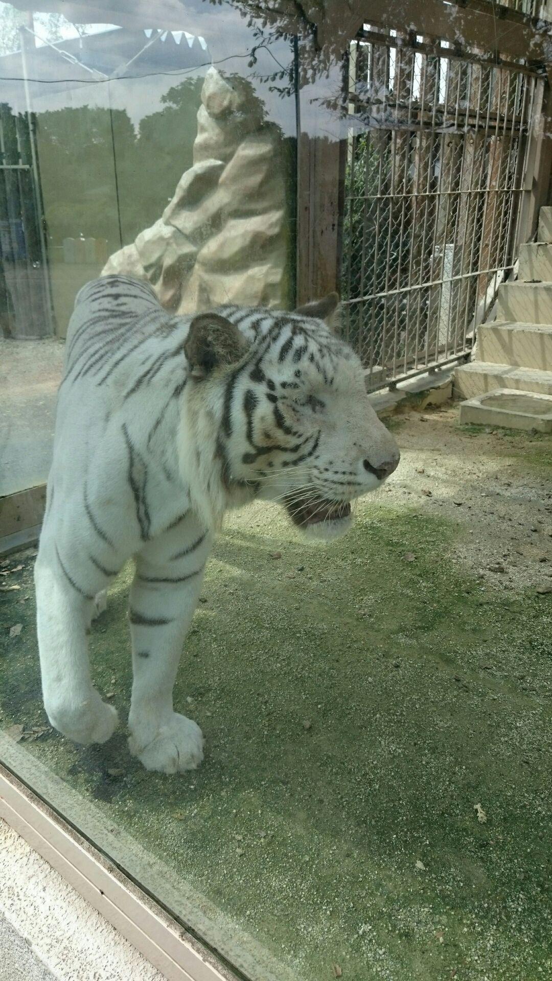 東武動物公園に行って来ました!